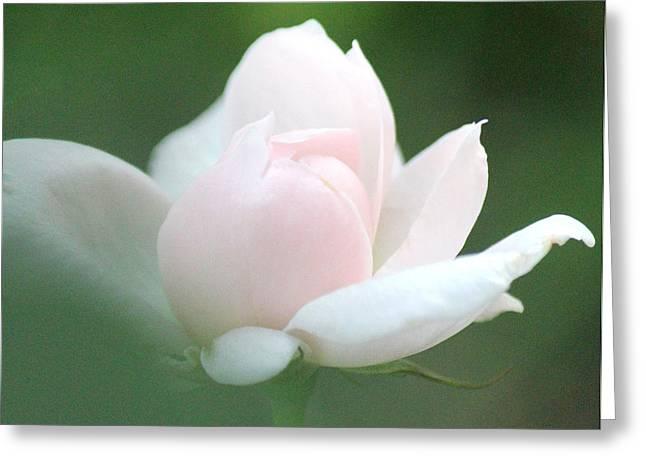 Heaven Sent Greeting Card by  The Art Of Marilyn Ridoutt-Greene