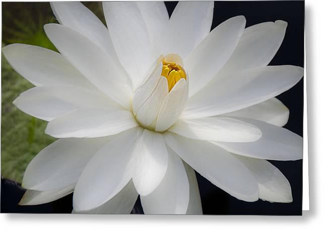 Heavenly Aquatic Bloom Greeting Card by Julie Palencia