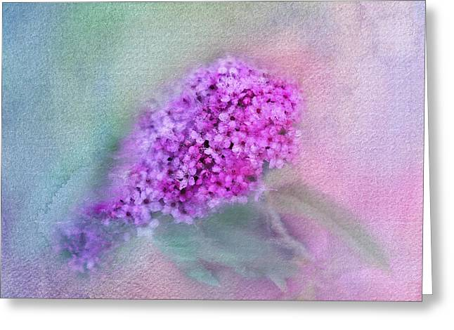 Spirea Greeting Cards - Heavenly Greeting Card by Betty LaRue