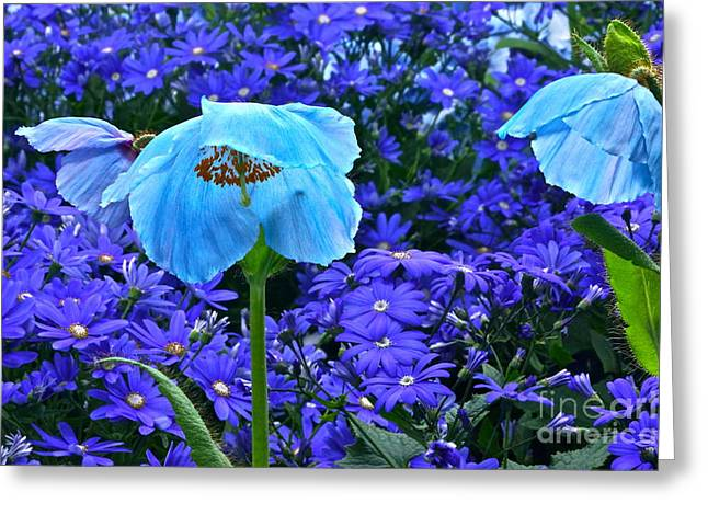 Heavenly Blue On Blue And Purple Greeting Card by Byron Varvarigos