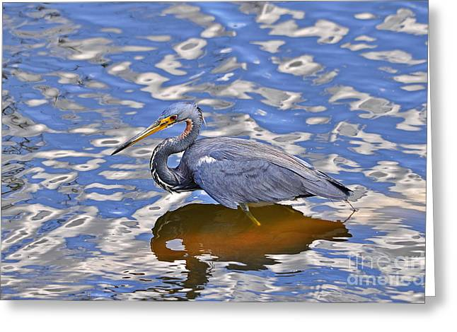 Egretta Tricolor Greeting Cards - Heavenly Heron Greeting Card by Al Powell Photography USA
