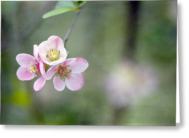 Pink Blossoms Greeting Cards - Heavenly Trio Greeting Card by Rebecca Cozart