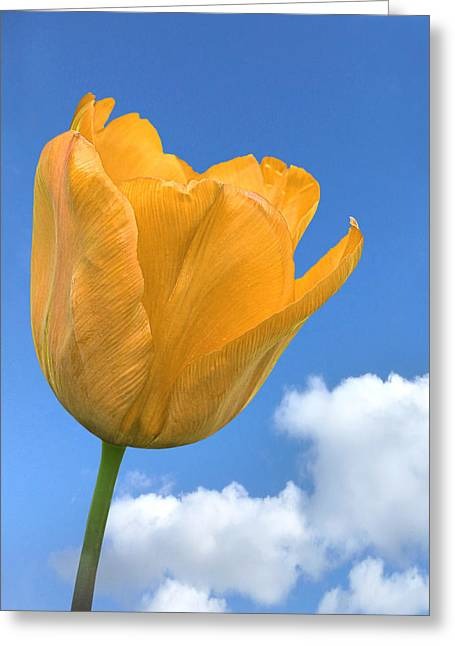 Yellow On Blue Greeting Cards - Heavenly Tulip Greeting Card by Gill Billington