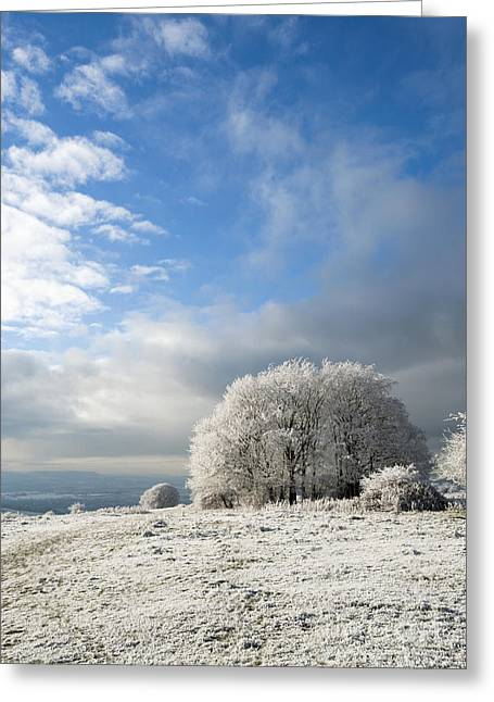 Wintry Photographs Greeting Cards - Heavy Frost Greeting Card by Anne Gilbert