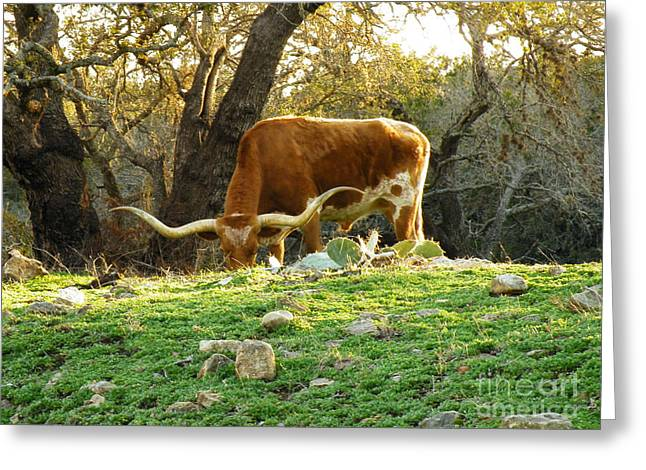 Cows Framed Prints Greeting Cards - Heavy Horns Greeting Card by Joe Jake Pratt