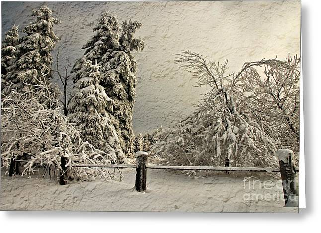 White Knob Mountains Greeting Cards - Heavy Laden Blizzard Greeting Card by Lois Bryan