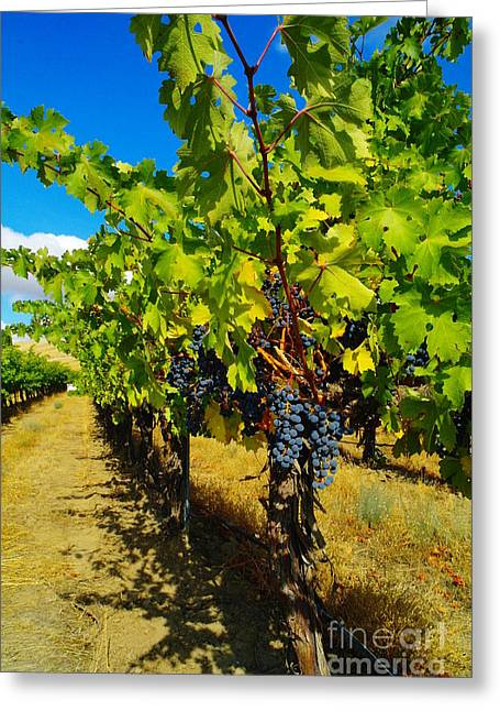 Yakima Valley Greeting Cards - Heavy On The Vine At The High Tower Winery  Greeting Card by Jeff  Swan