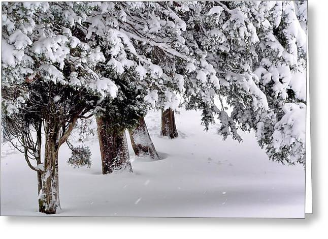 Snowstorm Prints Greeting Cards - Heavy Snow Greeting Card by Janice Drew