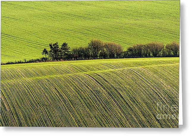 Hedgerow Conga Greeting Card by Richard Thomas