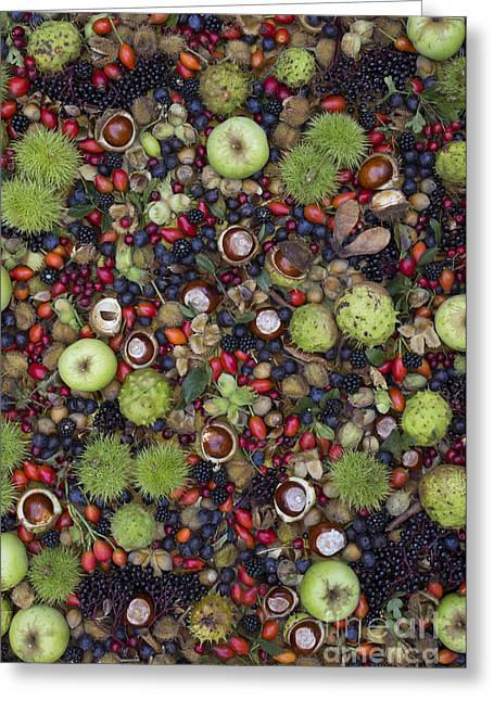 Harvest Art Photographs Greeting Cards - Hedgerow Harvest Greeting Card by Tim Gainey
