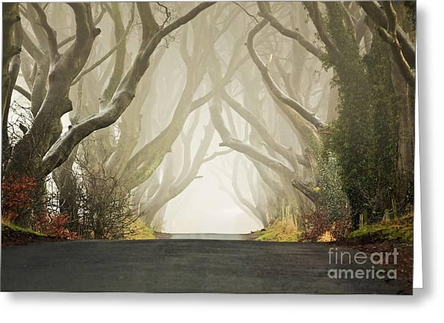 Dark Hedges Greeting Cards - Hedges Greeting Card by Pawel Klarecki