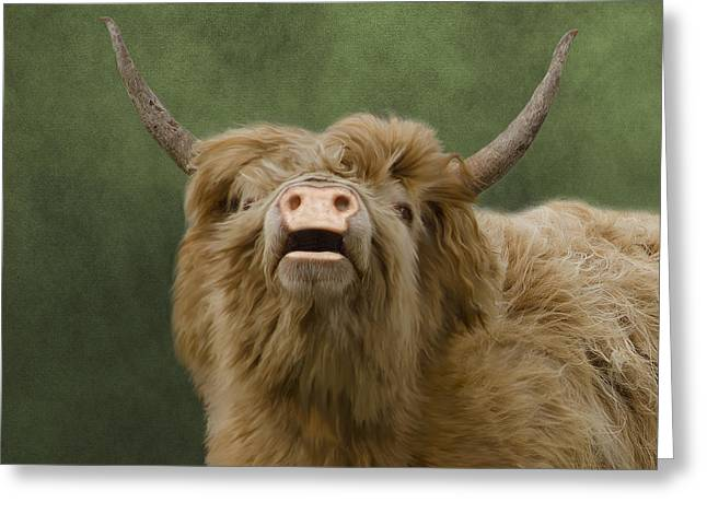 Country Woolies Greeting Cards - Heelan Coo Greeting Card by Linsey Williams