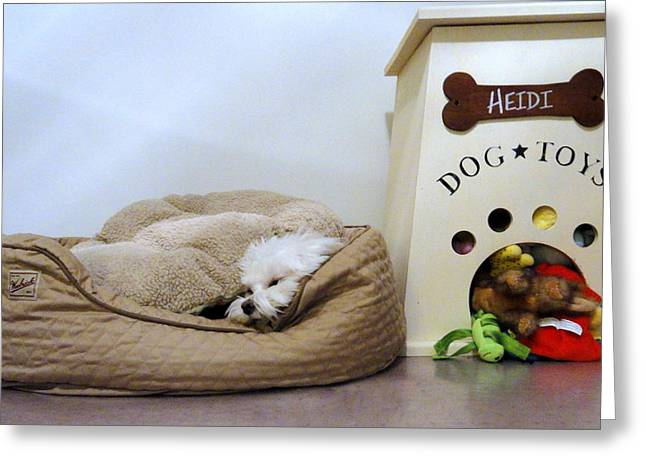 Toy Maltese Photographs Greeting Cards - Heidi Hides Greeting Card by Mary Beth Landis