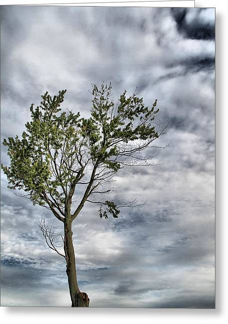 Climb Tree Greeting Cards - Height Of Nature Greeting Card by Dan Sproul