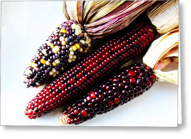 Indiana Corn Rows Greeting Cards - Heirloom Corn Greeting Card by Tina M Wenger