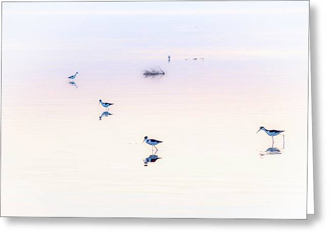 Great Blue Heron Greeting Cards - Heiwa I Greeting Card by Peter Tellone