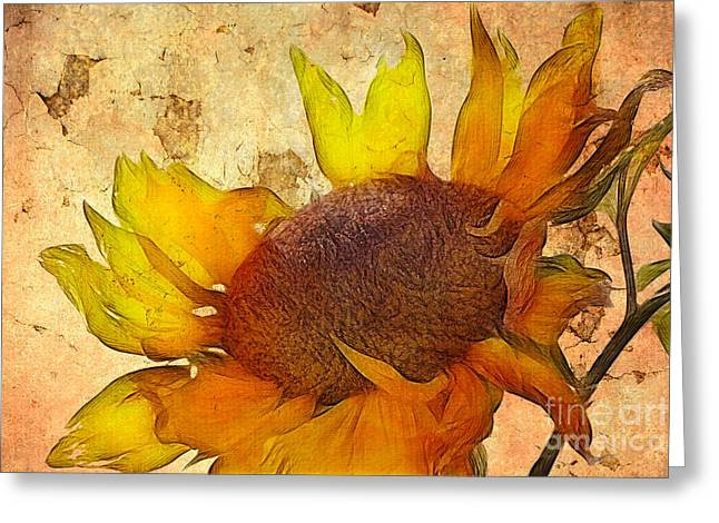 Petals Digital Greeting Cards - Helianthus Greeting Card by John Edwards