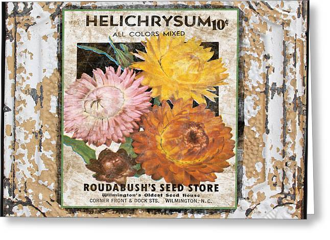 Floral Digital Art Digital Art Greeting Cards - Helichrysum on Vintage Tin Greeting Card by Jean Plout