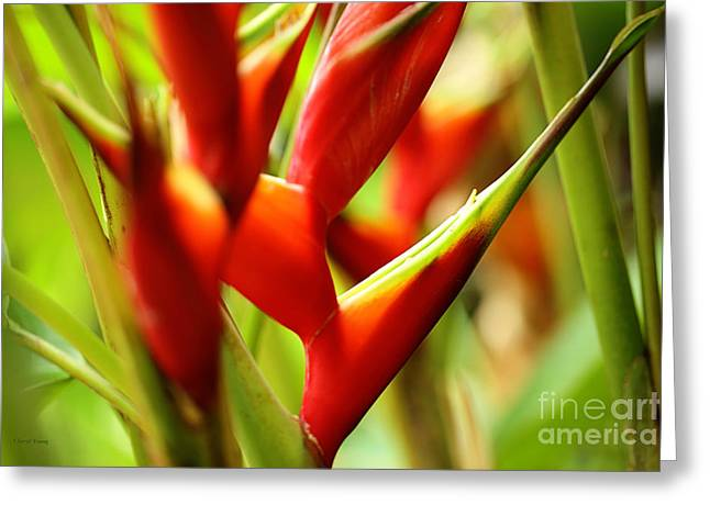 Heliconia Greeting Cards - Heliconia Greeting Card by Cheryl Young