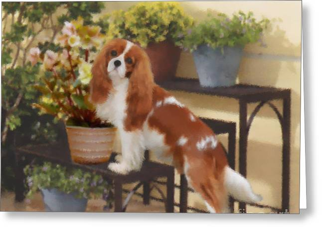 Puppies Pastels Greeting Cards - Hellebore Admirer Cavalier  Greeting Card by Magna Carta