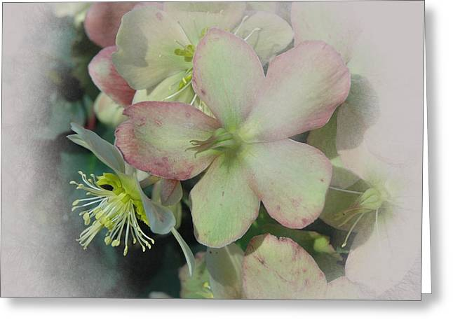 Pacific Northwest Digital Art Greeting Cards - Hellebores1 Greeting Card by Jeff Burgess