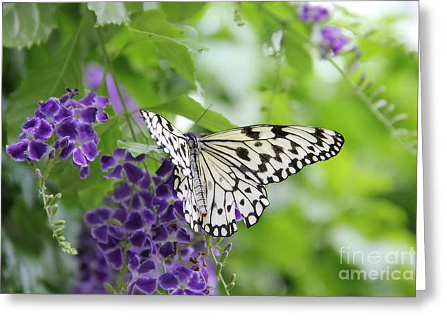 Enjoying Greeting Cards - Hello beauty Greeting Card by Jackie Mestrom