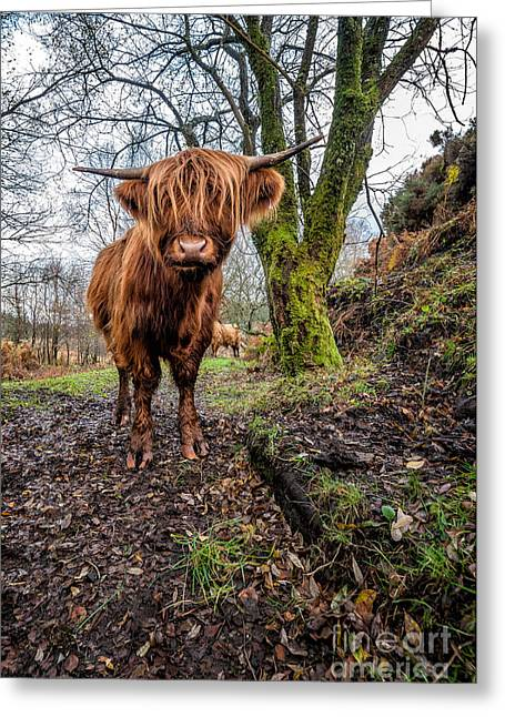 Bos Bos Digital Art Greeting Cards - Hello Cow Greeting Card by Adrian Evans