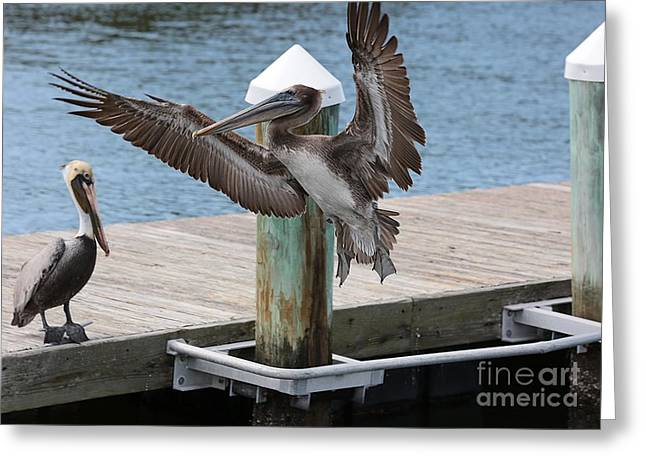 Pelicans Flying Greeting Cards - Hello Friend Greeting Card by Carol Groenen