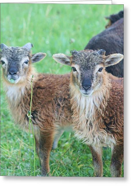 Wildlive Greeting Cards - Hello  Greeting Card by Gabriella Weninger - David