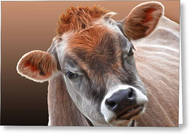 Jersey Cow Greeting Cards - Hello Greeting Card by Gill Billington