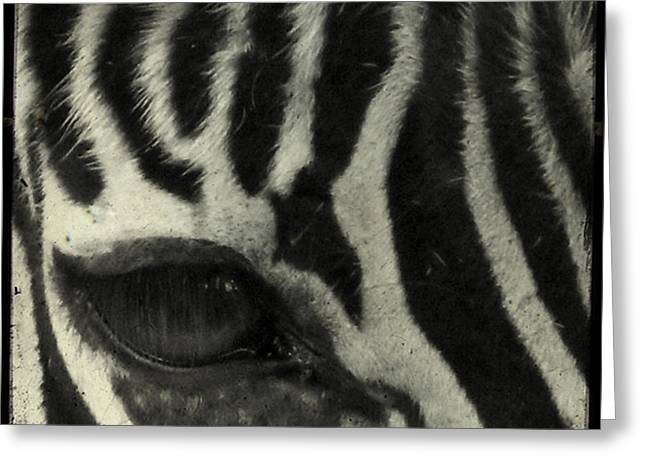 Animals Photos Greeting Cards - Hello Greeting Card by Gothicolors Donna Snyder