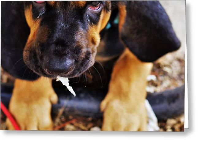 Blood Hound Greeting Cards - I Am Crying Over You..... Greeting Card by Rosemarie E Seppala