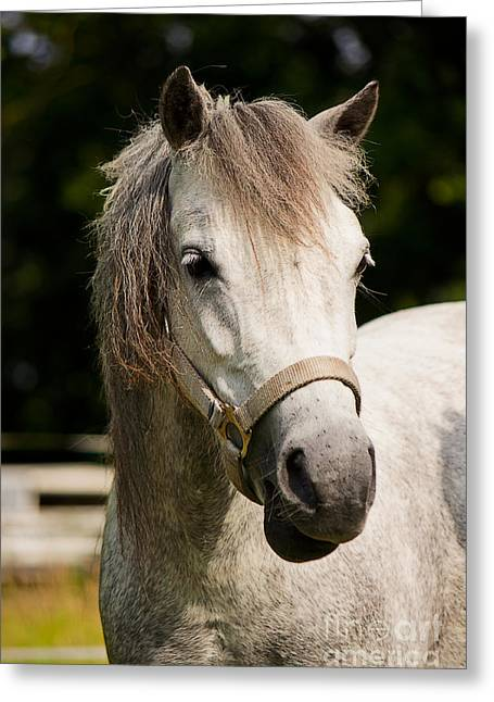 Horse Images Greeting Cards - Hello Lulu Greeting Card by Angela Doelling AD DESIGN Photo and PhotoArt