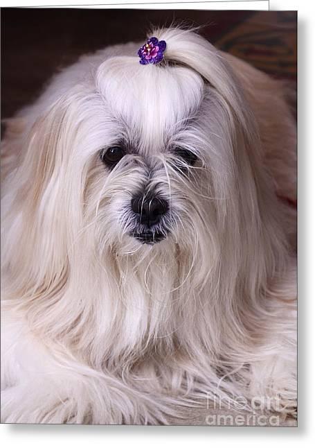 Doggies Greeting Cards - Hello Precious Greeting Card by Bob Christopher
