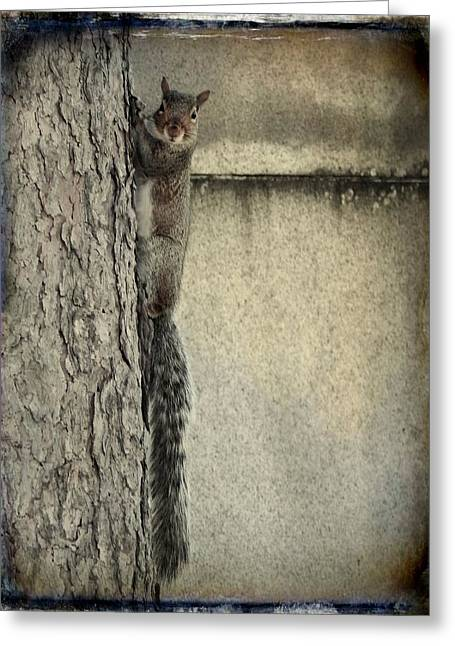 Tree Squirrel Greeting Cards - Hello Squirrel Greeting Card by Gothicolors Donna Snyder