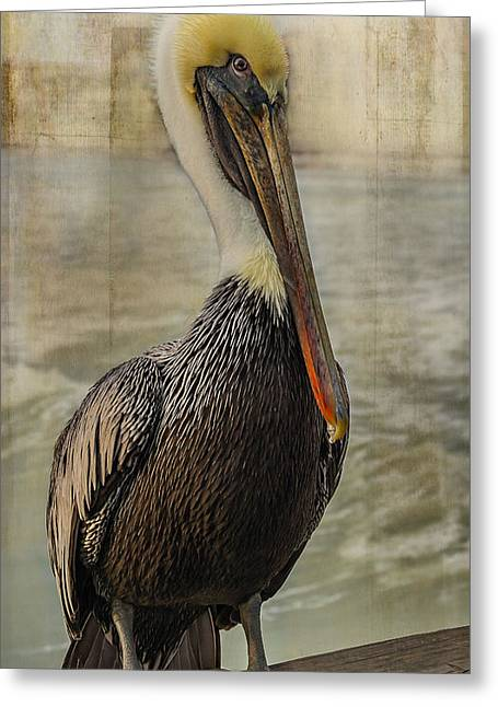Seabirds Greeting Cards - Hello Greeting Card by Steven Reed