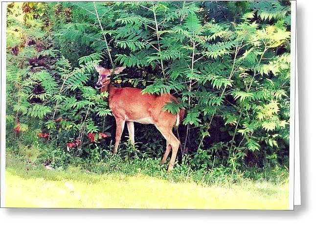 Next To Tree Greeting Cards - Hello There I Am Shy Greeting Card by Kimberlee  Baxter