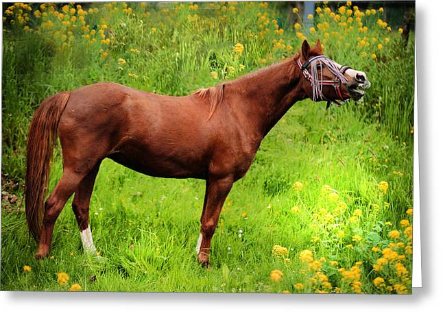Beautiful Horse Photography Greeting Cards - Hello You Greeting Card by Jenny Rainbow