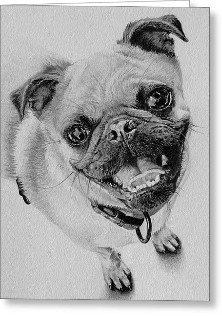 Pencil Drawings Of Pets Greeting Cards - Hellooo Greeting Card by Kathryn Hansen