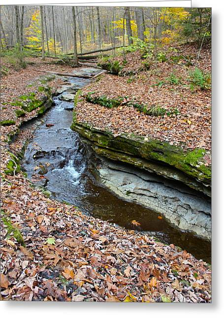 Mcconnels Mill Greeting Cards - Hells Hollow Trail 2 Greeting Card by Marie Spence