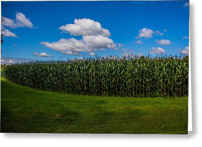 Maine Farms Greeting Cards - Helpful Corn Greeting Card by Jason Brow