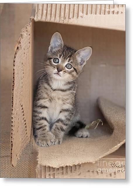 Cardboard Greeting Cards - Hemingway Tabby Kitten Inside Box IMG_4350 Greeting Card by Kelly Richardson