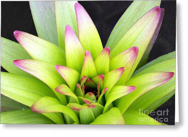 Pinks And Purple Petals Photographs Greeting Cards - Hen and Chick Greeting Card by Gena Weiser