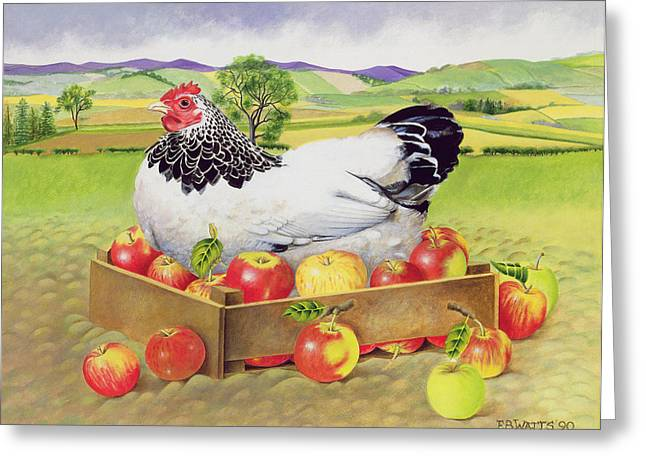 Observe Greeting Cards - Hen in a Box of Apples Greeting Card by EB Watts