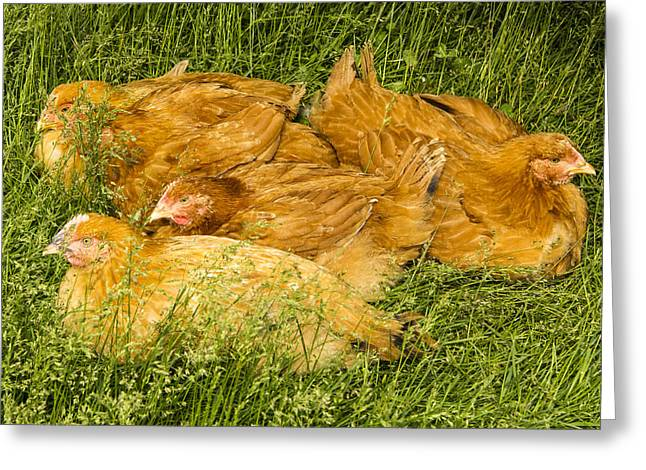 Hen Party Greeting Card by Jean Noren