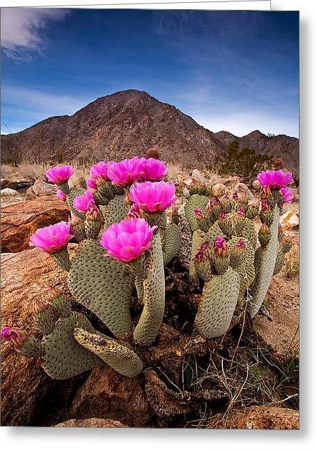 Desert Greeting Cards - Henderson Canyon Beavertail Greeting Card by Peter Tellone