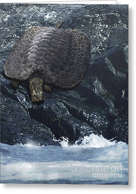 Triassic Greeting Cards - Henodus Turtle At The Waters Edge Greeting Card by Jan Sovak