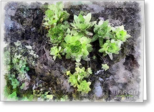 Hen And Chicks Greeting Cards - Hens and Chicks - Botanical Illustration Greeting Card by Janine Riley