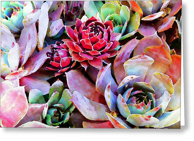 Flora Photo Greeting Cards - Hens and Chicks series - Copper Tarnish  Greeting Card by Moon Stumpp