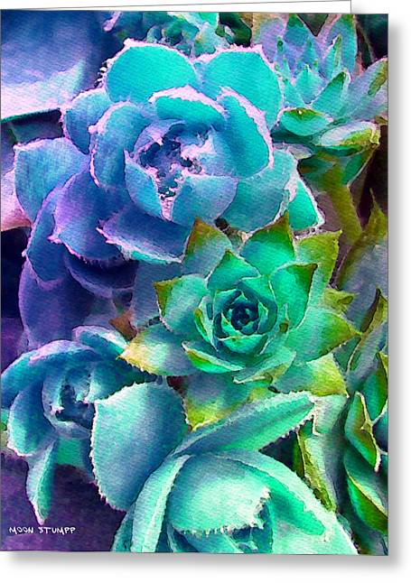 Romantic Floral Greeting Cards - Hens and Chicks series - Deck Blues Greeting Card by Moon Stumpp